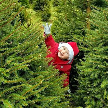 norway spruce with child